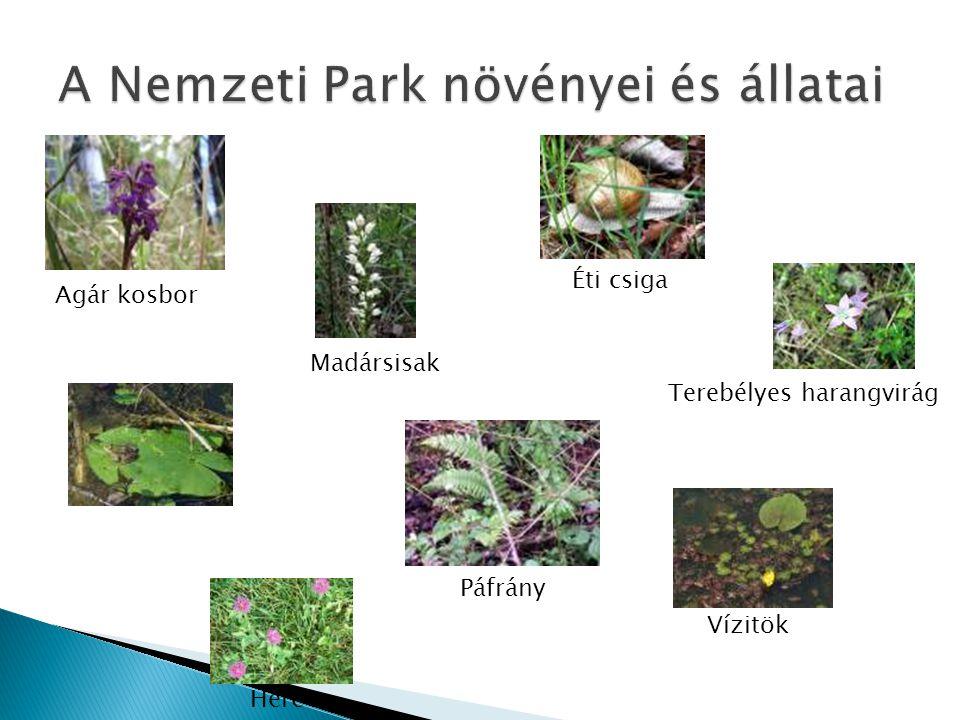 A Nemzeti Park növényei és állatai