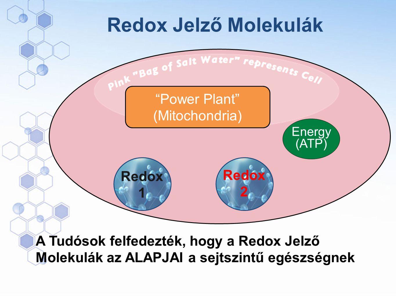 Power Plant (Mitochondria)