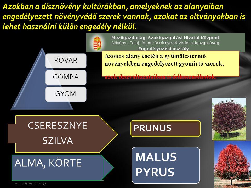 MALUS PYRUS ALMA, KÖRTE CSERESZNYE SZILVA PRUNUS