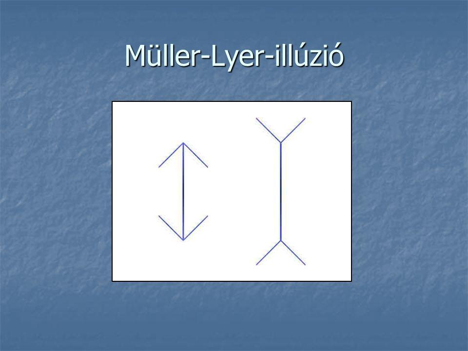 Müller-Lyer-illúzió