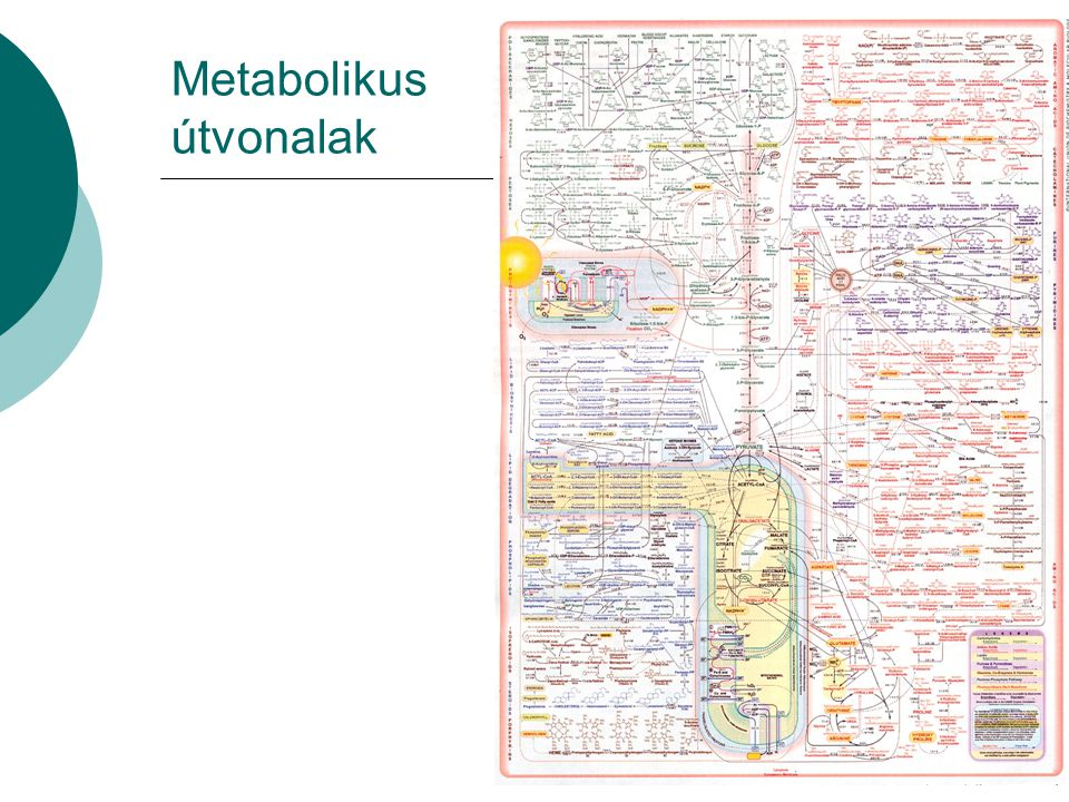 Metabolikus útvonalak