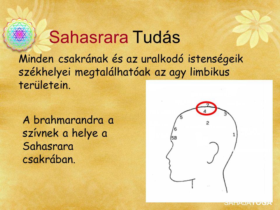 Sahasrara Tudás Minden csakrának és az uralkodó istenségeik székhelyei megtalálhatóak az agy limbikus területein.