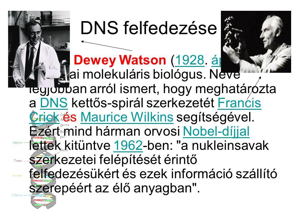 DNS felfedezése