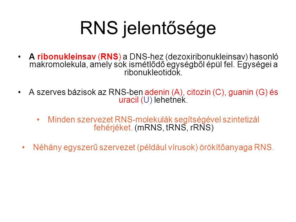 Néhány egyszerű szervezet (például vírusok) örökítőanyaga RNS.