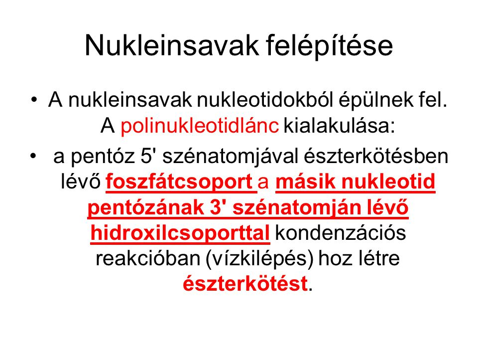 Nukleinsavak felépítése
