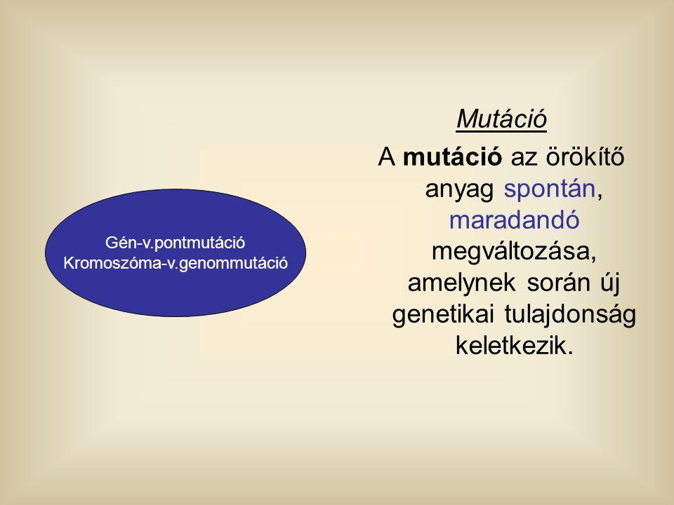 Kromoszóma-v.genommutáció