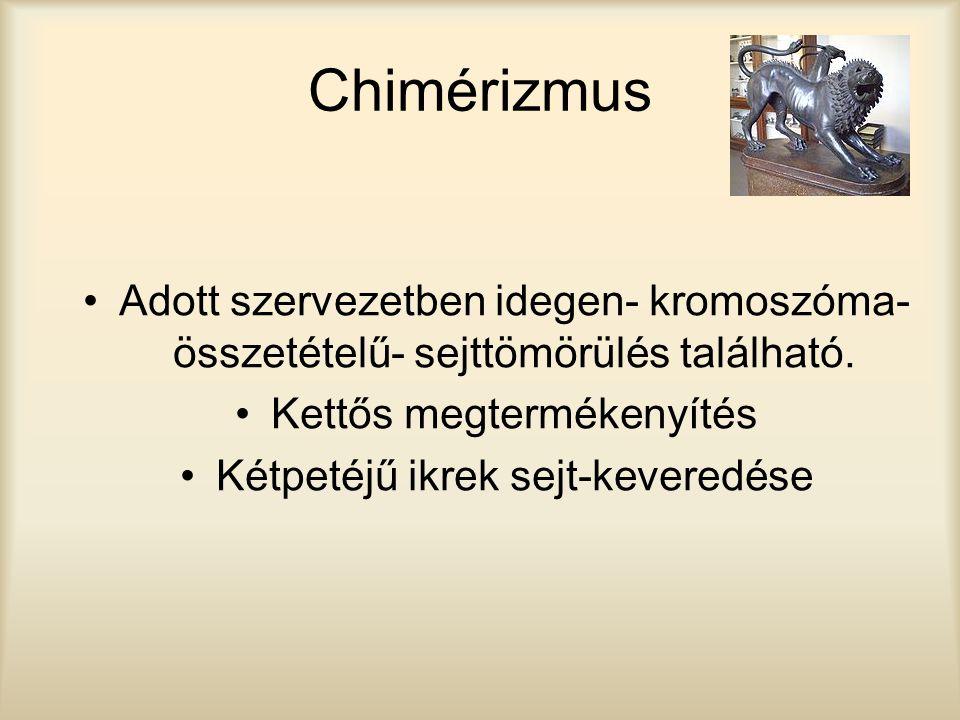 Chimérizmus Adott szervezetben idegen- kromoszóma-összetételű- sejttömörülés található. Kettős megtermékenyítés.