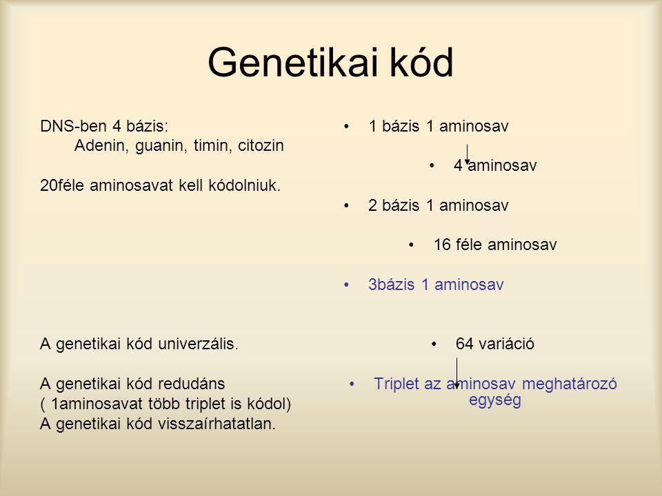 Genetikai kód DNS-ben 4 bázis: Adenin, guanin, timin, citozin