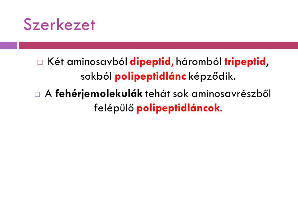 Szerkezet Két aminosavból dipeptid, háromból tripeptid, sokból polipeptidlánc képződik.