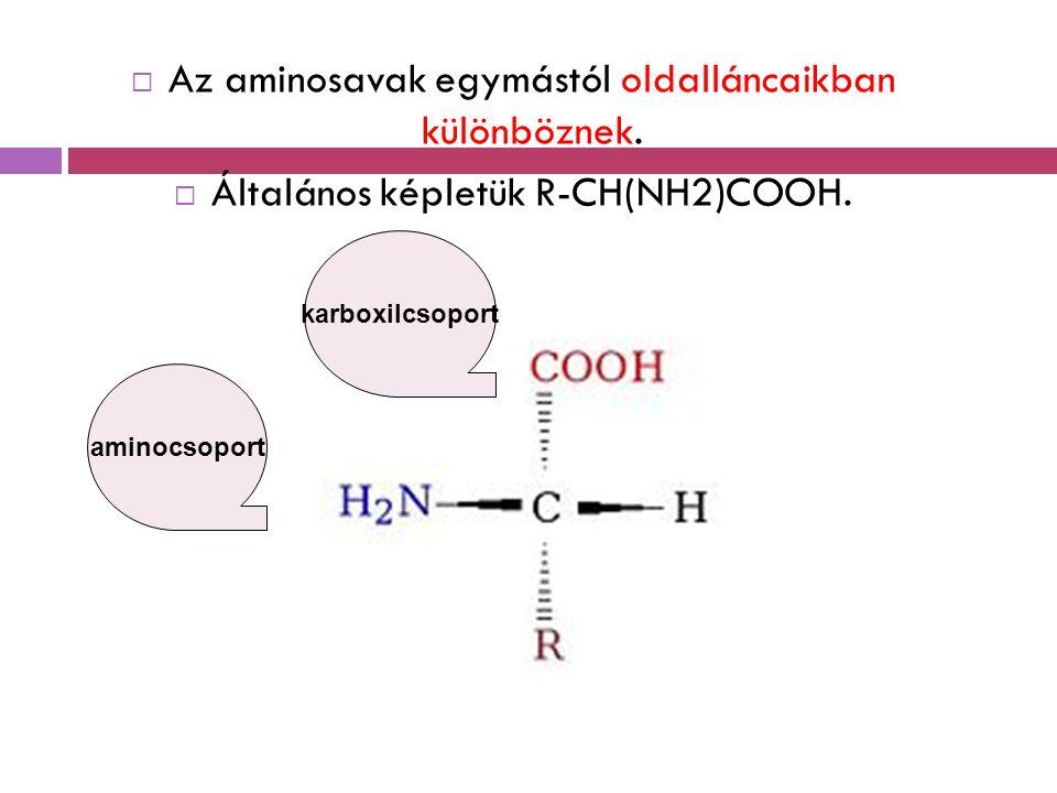 Az aminosavak egymástól oldalláncaikban különböznek.