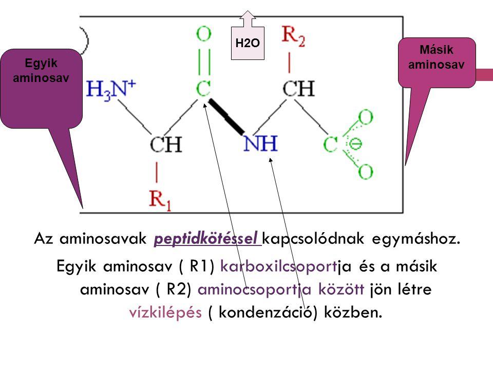 H2O Másik. aminosav. Egyik aminosav.