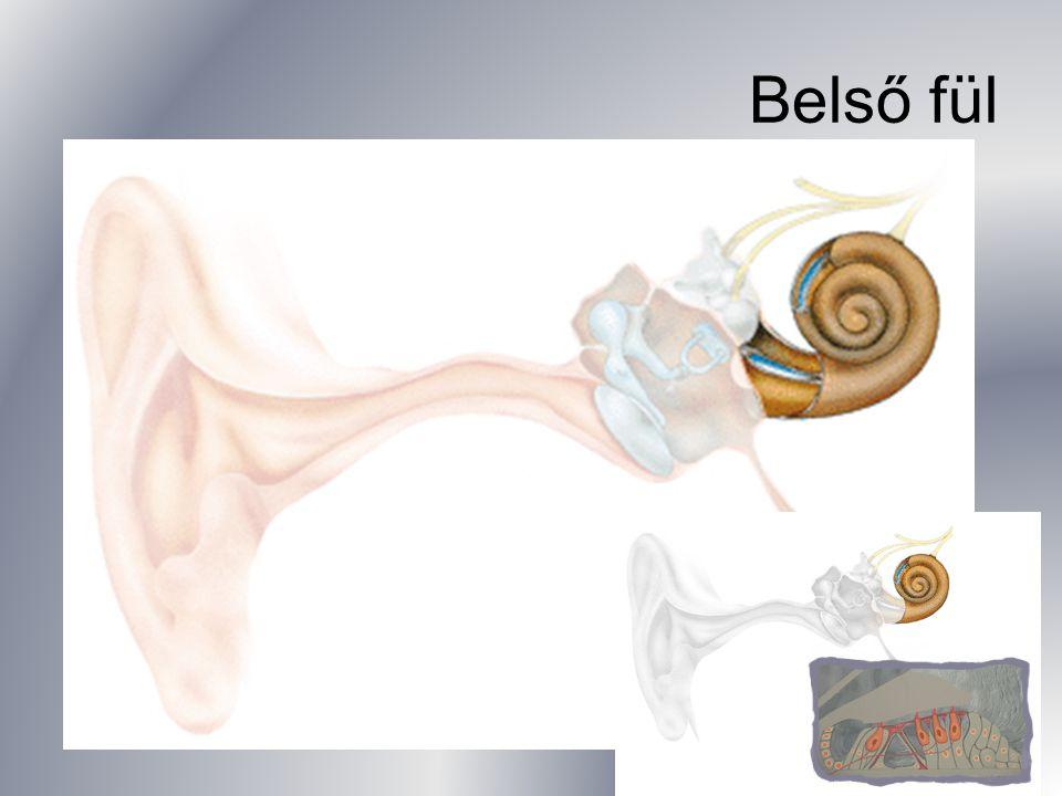 Belső fül