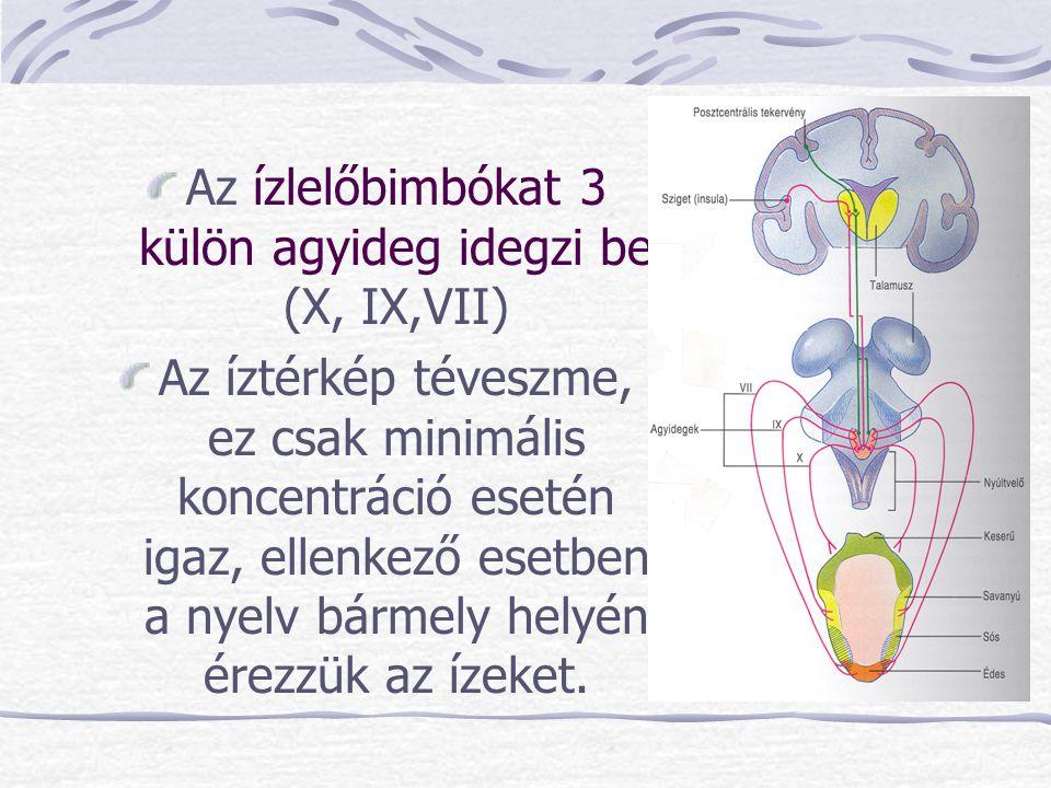 Az ízlelőbimbókat 3 külön agyideg idegzi be (X, IX,VII)