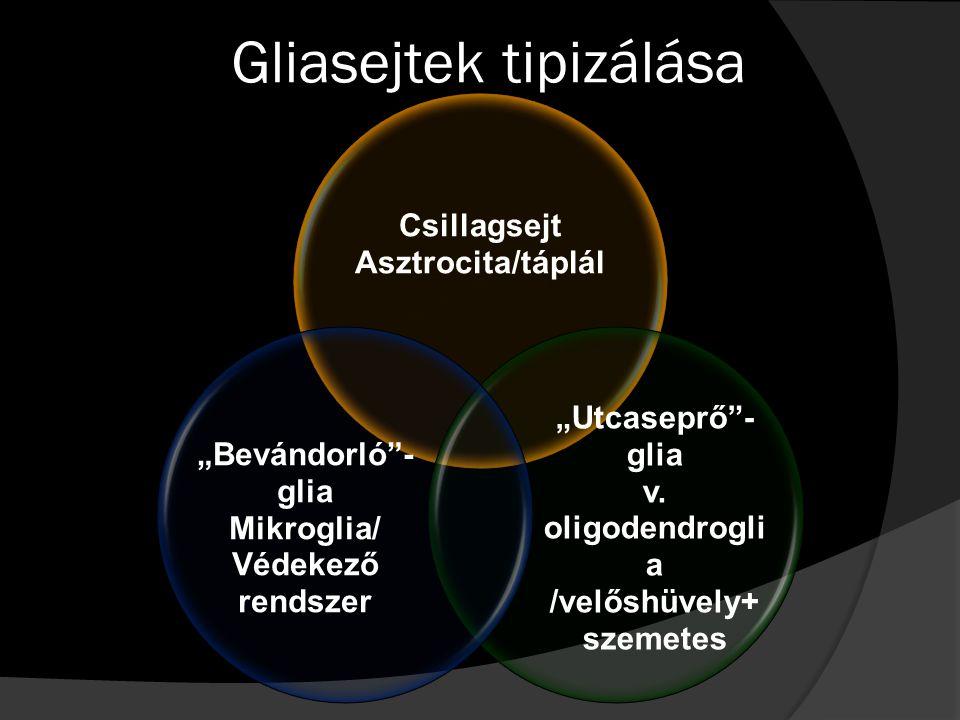 Gliasejtek tipizálása
