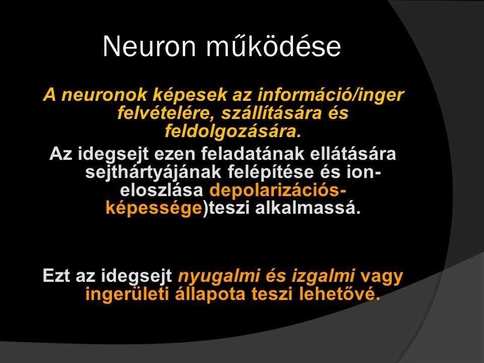 Neuron működése