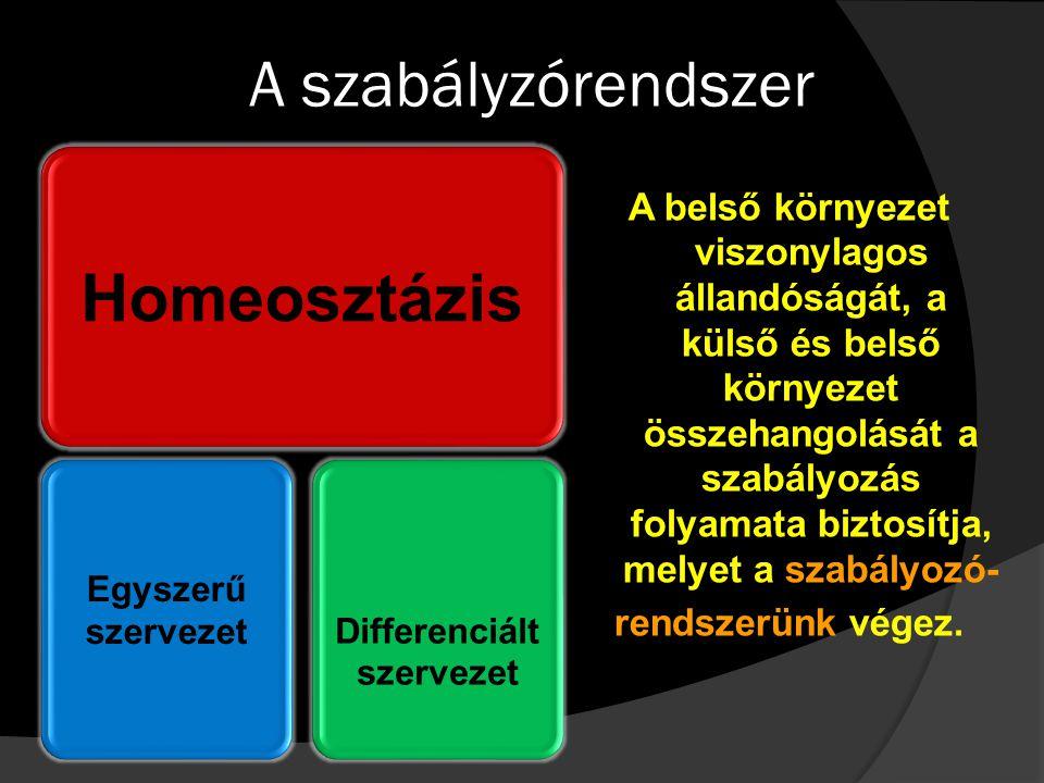 Differenciált szervezet