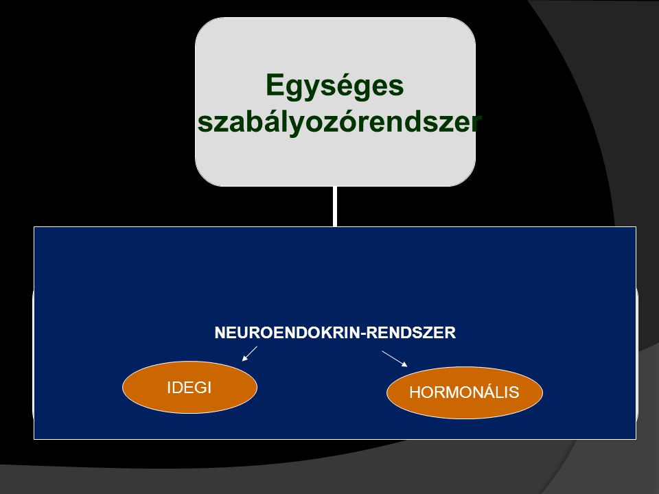 NEUROENDOKRIN-RENDSZER