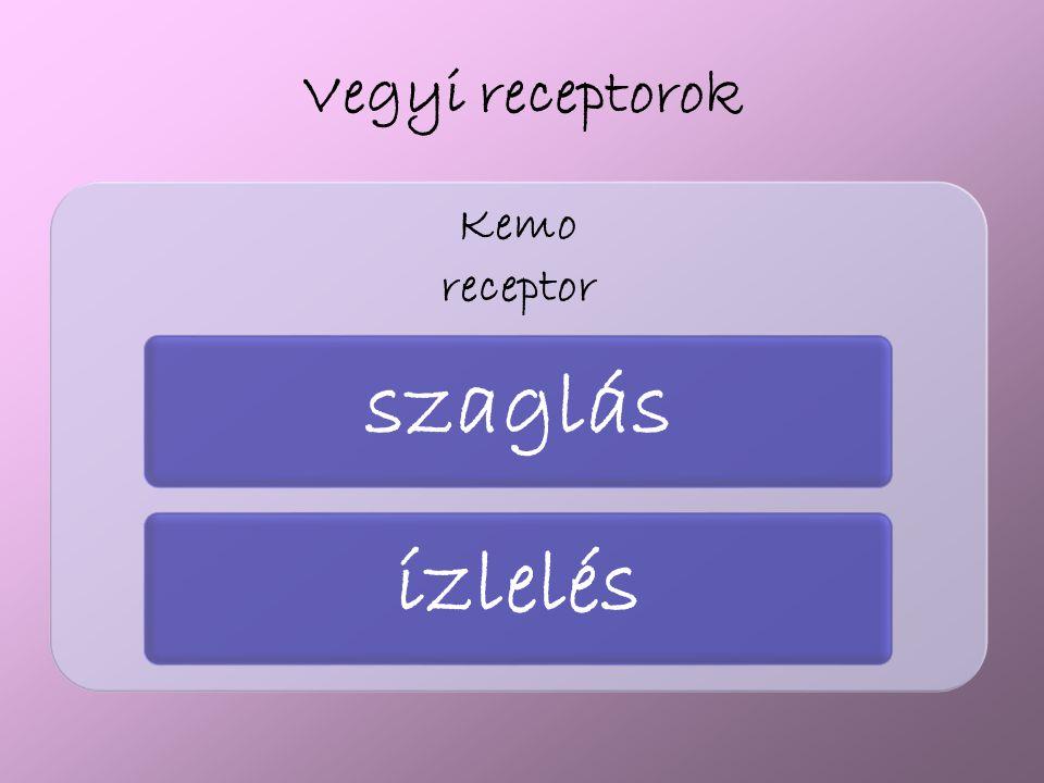 Vegyi receptorok receptor Kemo szaglás ízlelés