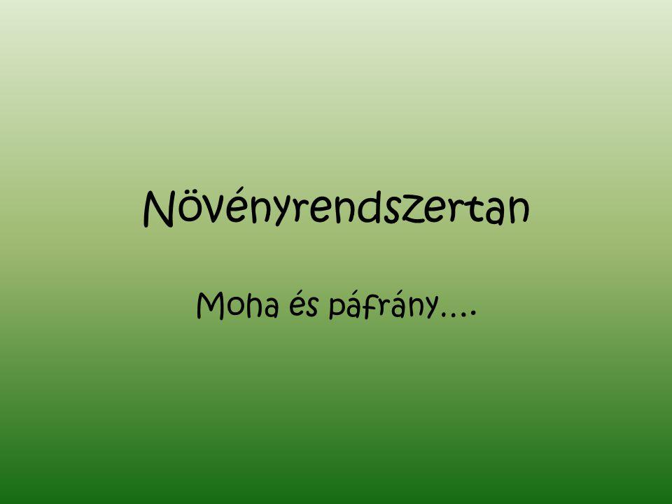Növényrendszertan Moha és páfrány….