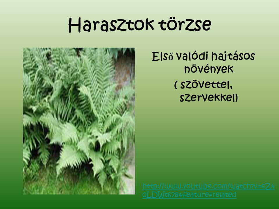 Első valódi hajtásos növények ( szövettel, szervekkel)