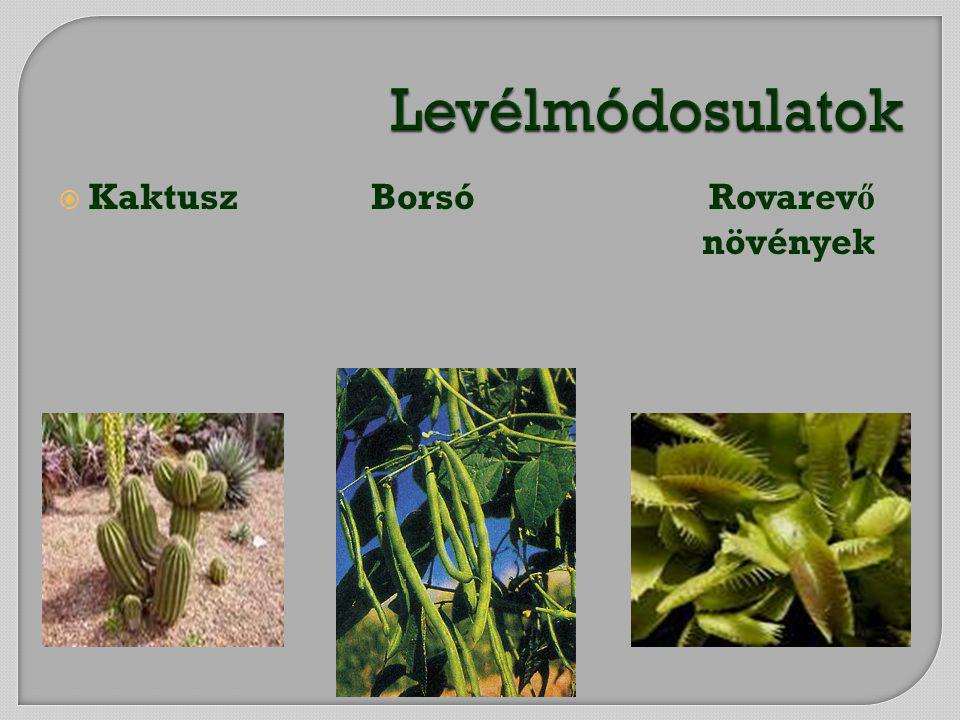 Levélmódosulatok Kaktusz Borsó Rovarevő növények