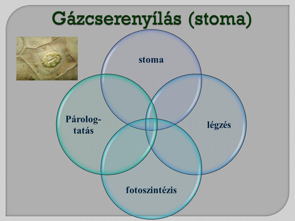 Gázcserenyílás (stoma)