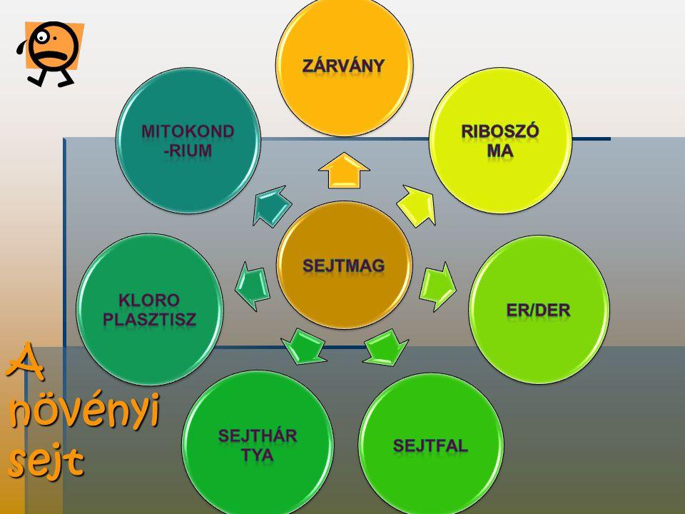 A növényi sejt sejtmag zárvány Riboszó ma Er/der sejtfal Sejthár tya