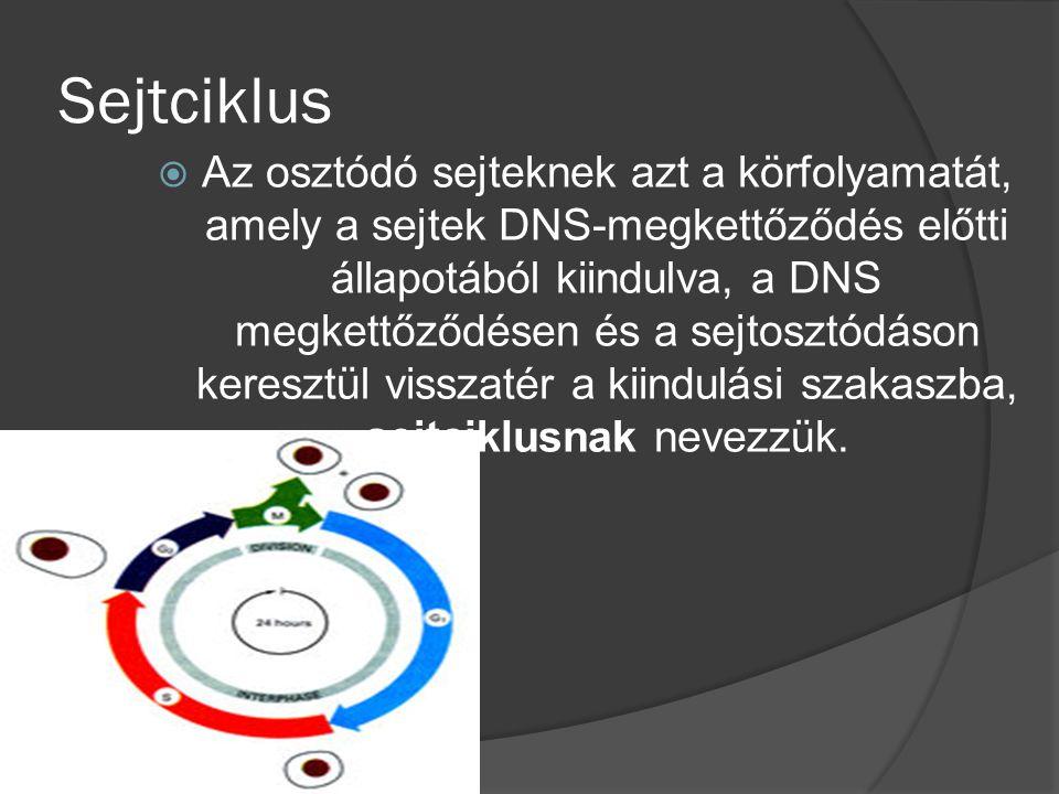 Sejtciklus