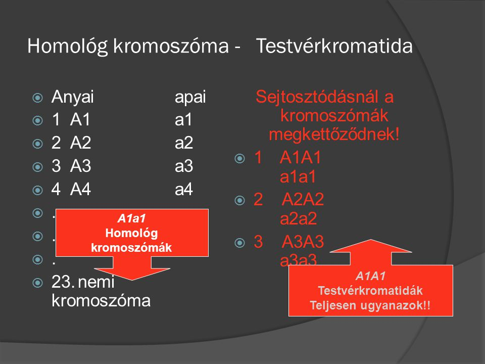 Homológ kromoszóma - Testvérkromatida