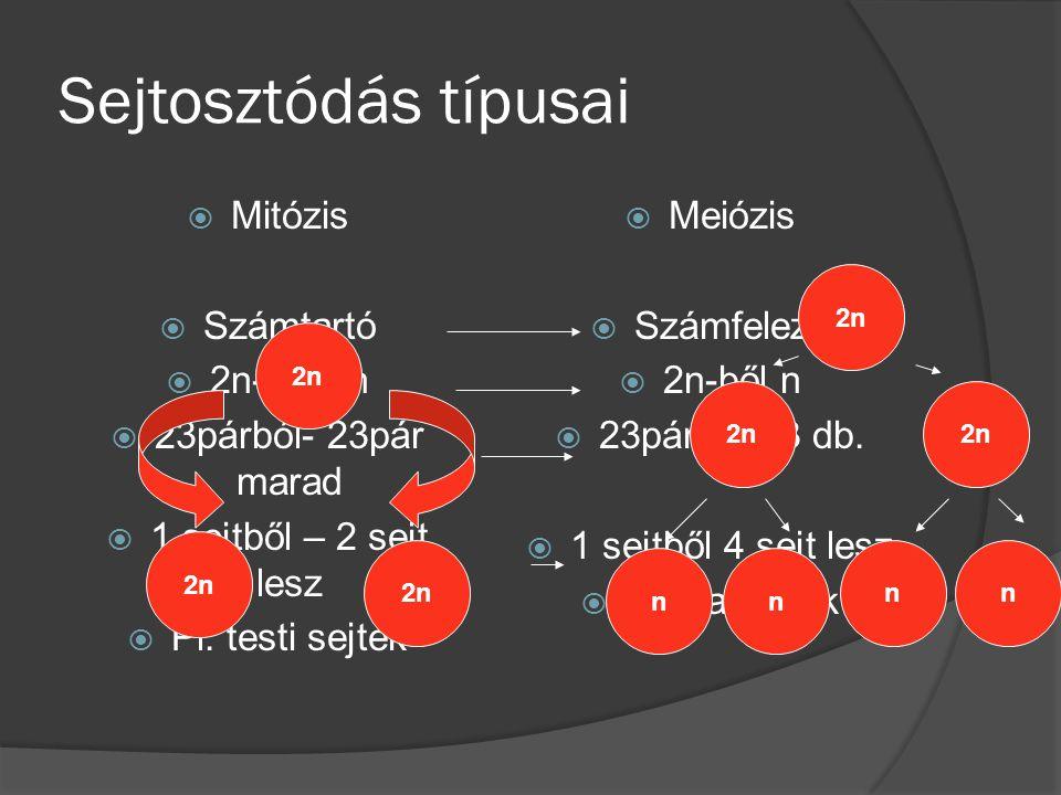 Sejtosztódás típusai Mitózis Számtartó 2n-ből 2n 23párból- 23pár marad