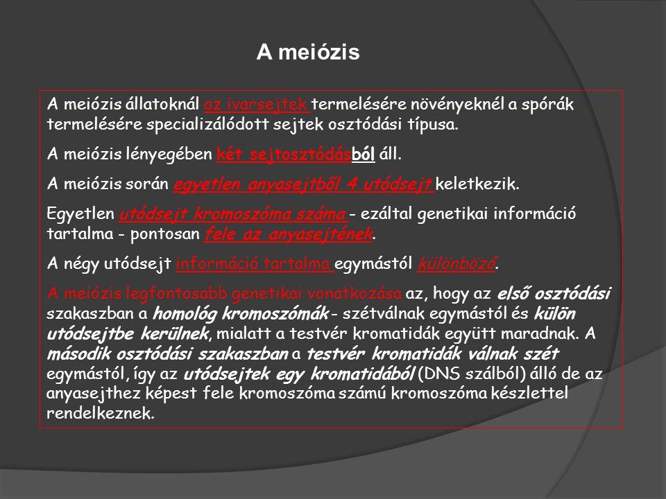 A meiózis A meiózis állatoknál az ivarsejtek termelésére növényeknél a spórák termelésére specializálódott sejtek osztódási típusa.