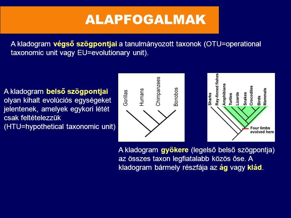 ALAPFOGALMAK A kladogram végső szögpontjai a tanulmányozott taxonok (OTU=operational. taxonomic unit vagy EU=evolutionary unit).