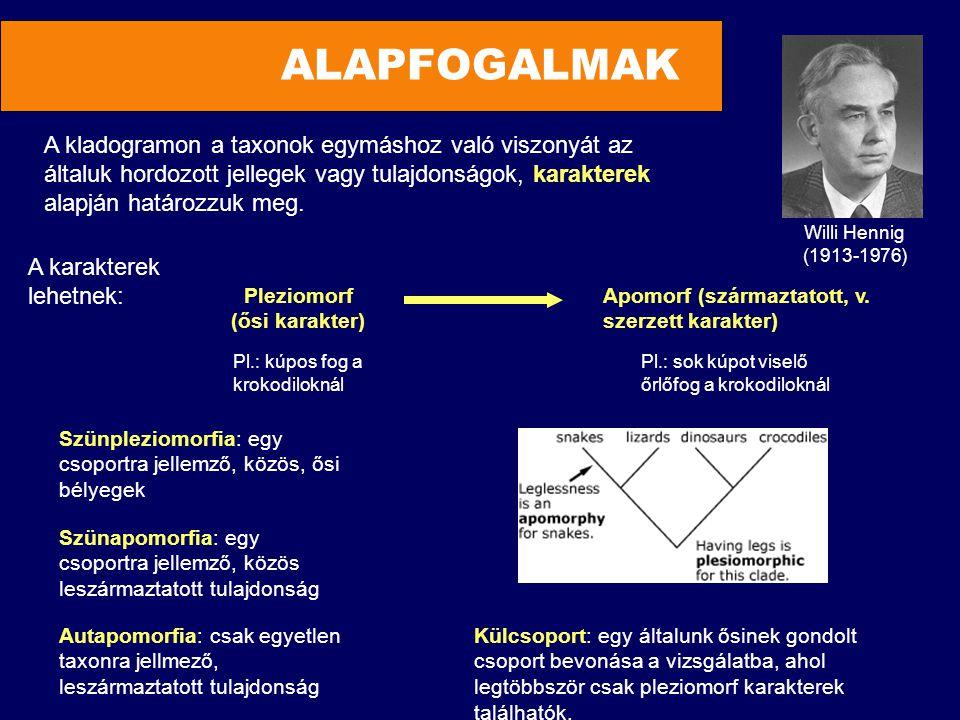 ALAPFOGALMAK A kladogramon a taxonok egymáshoz való viszonyát az
