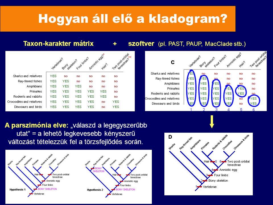 Hogyan áll elő a kladogram