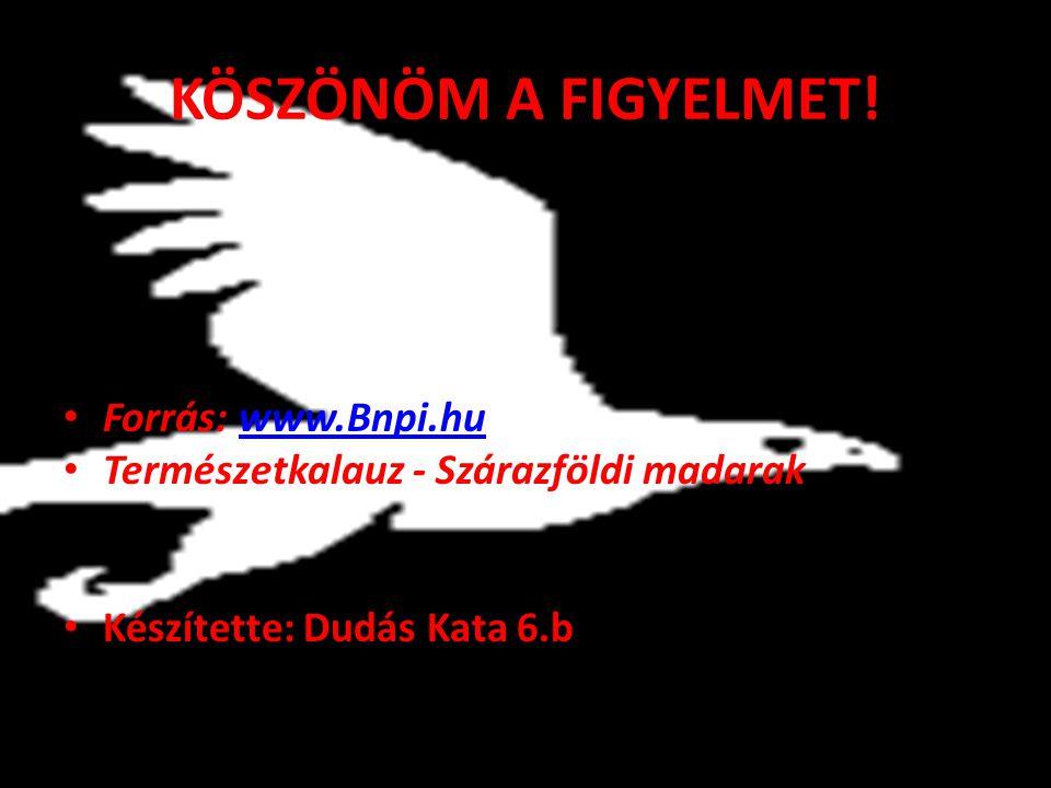 KÖSZÖNÖM A FIGYELMET! Forrás: www.Bnpi.hu