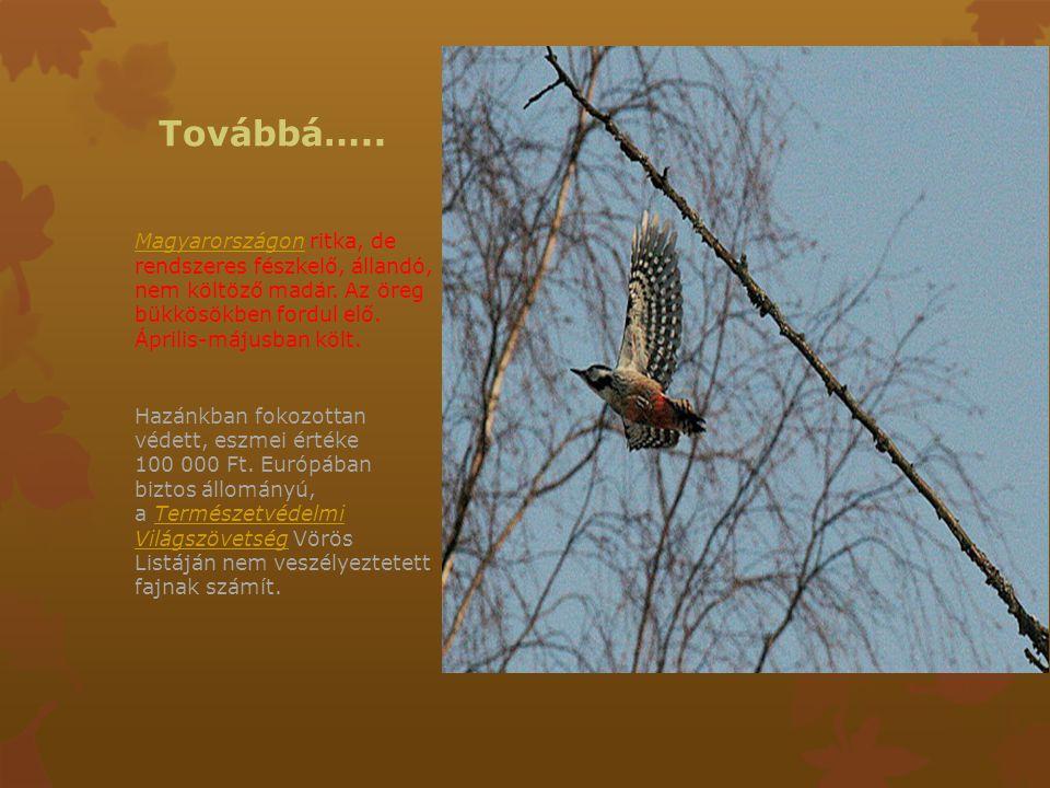 Továbbá….. Magyarországon ritka, de rendszeres fészkelő, állandó, nem költöző madár. Az öreg bükkösökben fordul elő. Április-májusban költ.