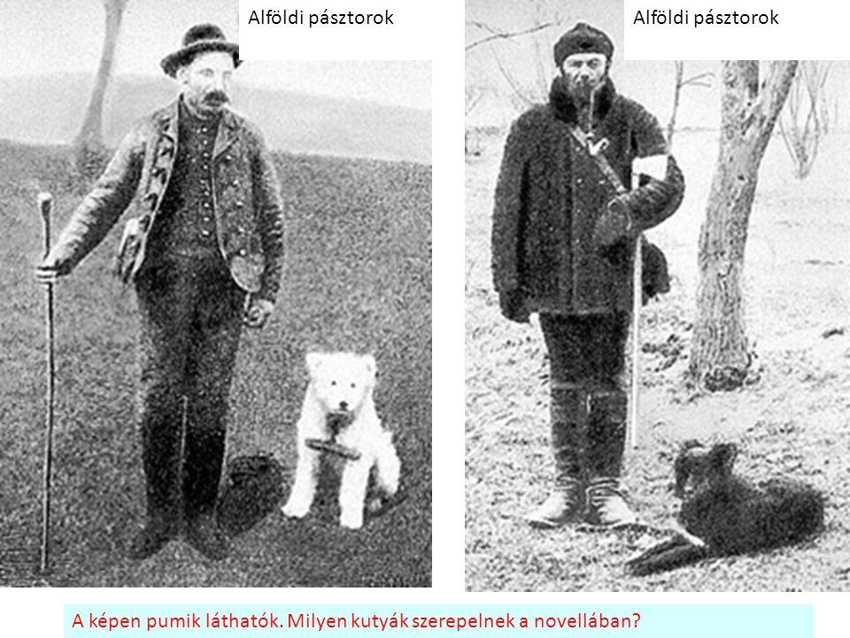 Alföldi pásztorok Alföldi pásztorok A képen pumik láthatók. Milyen kutyák szerepelnek a novellában