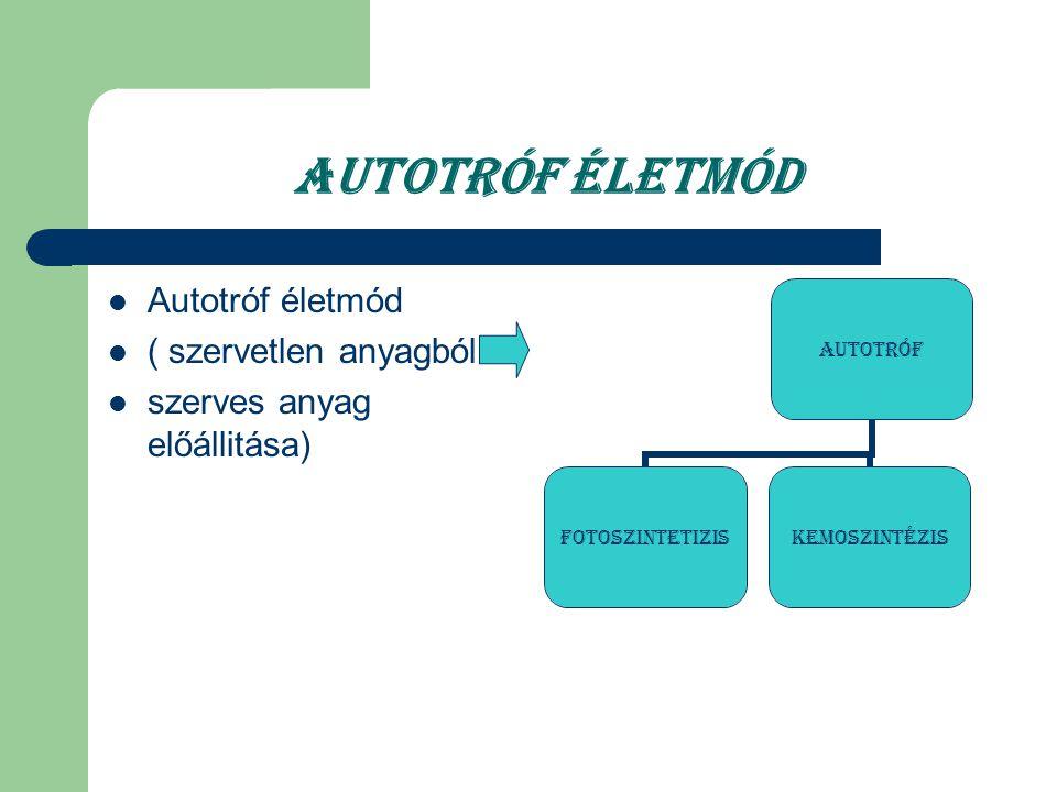Autotróf életmód Autotróf életmód ( szervetlen anyagból