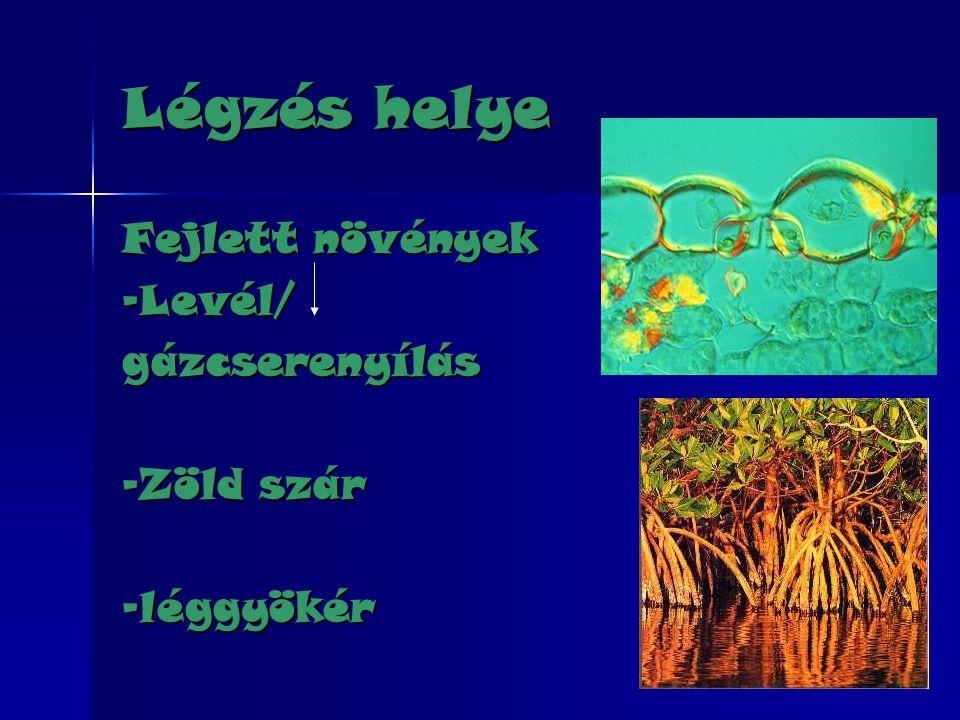 Légzés helye Fejlett növények -Levél/ gázcserenyílás -Zöld szár
