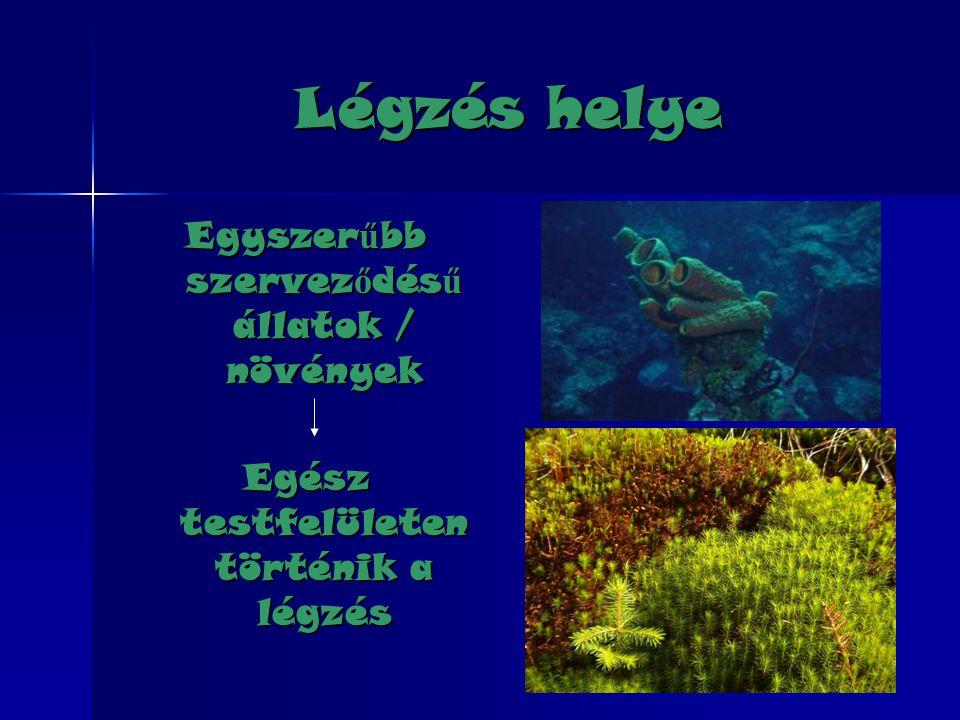 Légzés helye Egyszerűbb szerveződésű állatok / növények