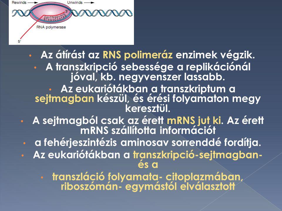 Az átírást az RNS polimeráz enzimek végzik.