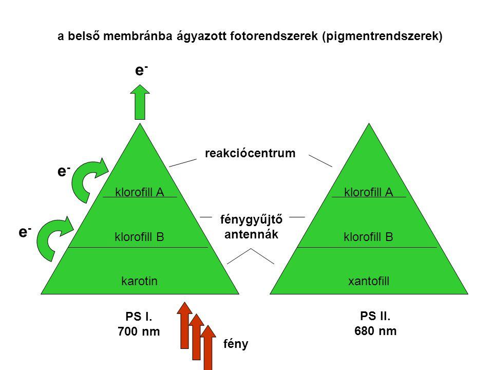e- a belső membránba ágyazott fotorendszerek (pigmentrendszerek)