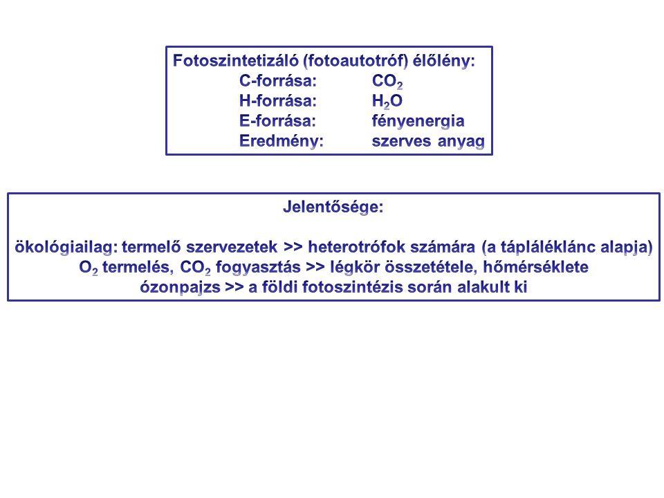 Fotoszintetizáló (fotoautotróf) élőlény: C-forrása: CO2 H-forrása: H2O