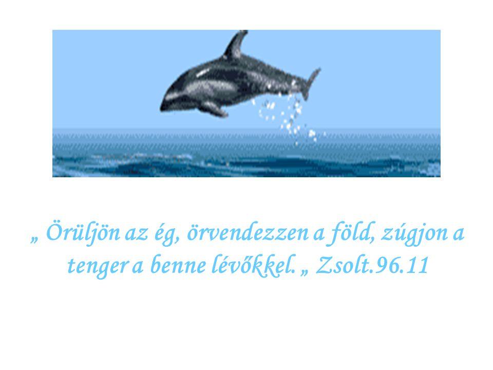 """"""" Örüljön az ég, örvendezzen a föld, zúgjon a tenger a benne lévőkkel"""