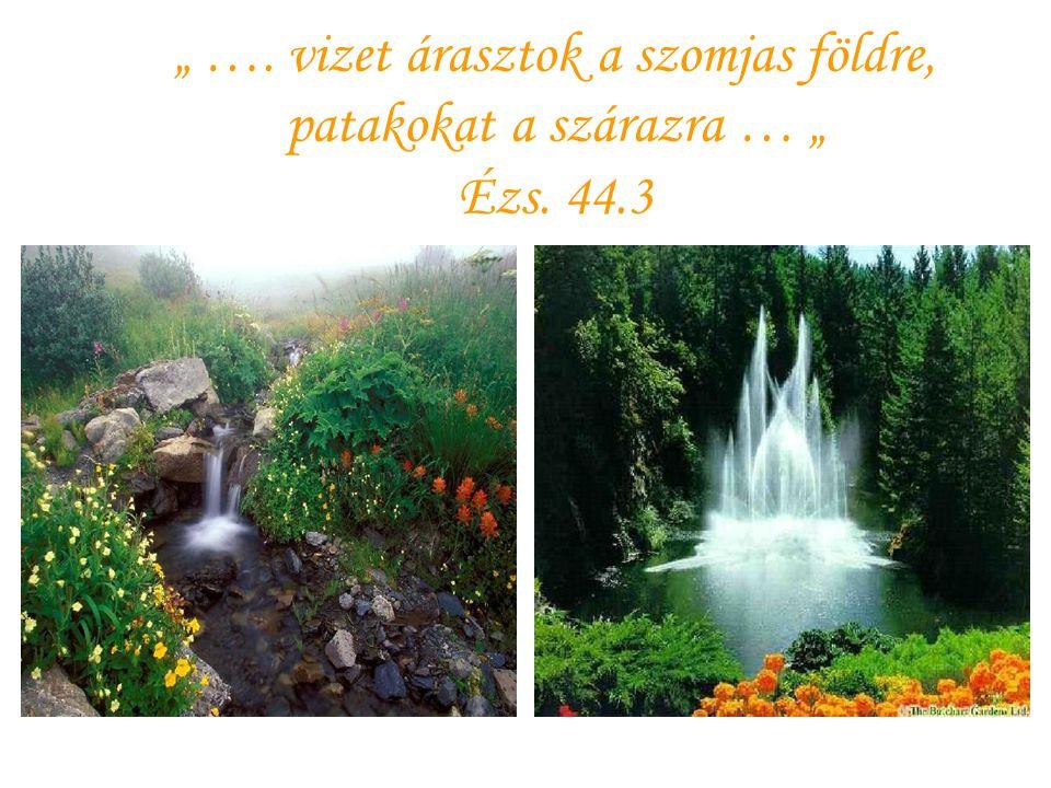 """"""" …. vizet árasztok a szomjas földre, patakokat a szárazra … """" Ézs. 44"""