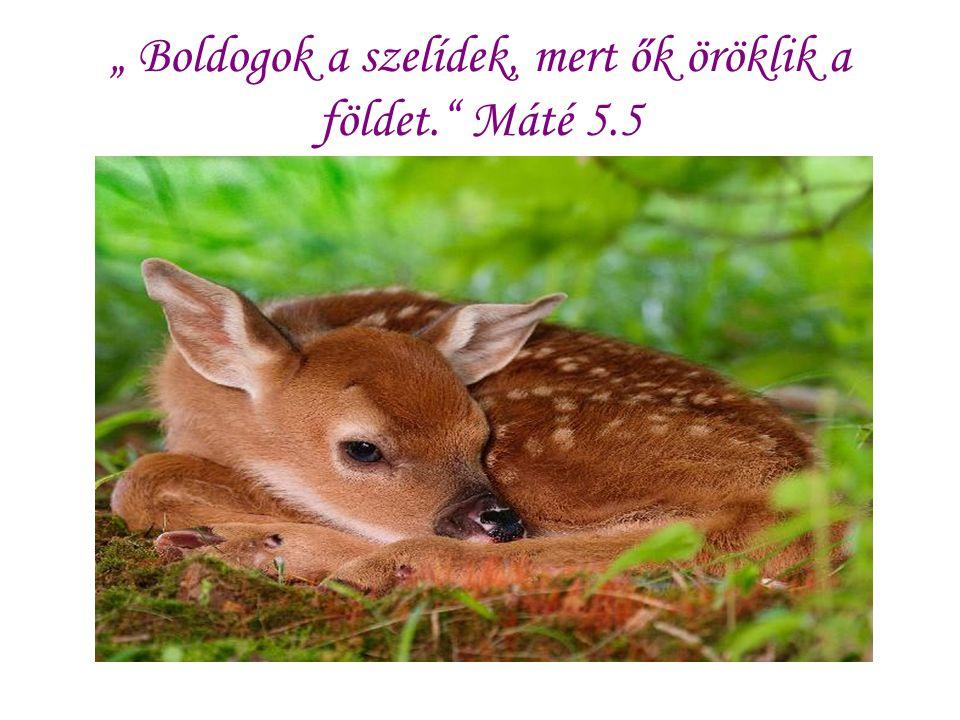 """"""" Boldogok a szelídek, mert ők öröklik a földet. Máté 5.5"""