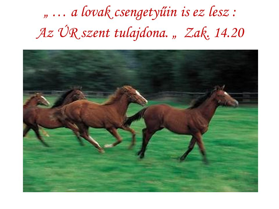 """"""" … a lovak csengetyűin is ez lesz : Az ÚR szent tulajdona. """" Zak. 14"""
