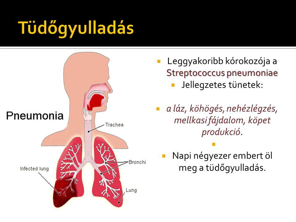 Tüdőgyulladás Leggyakoribb kórokozója a Streptococcus pneumoniae