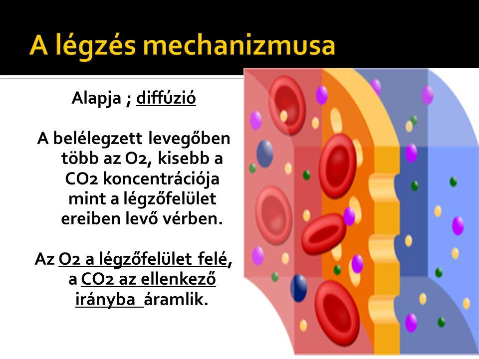 Az O2 a légzőfelület felé, a CO2 az ellenkező irányba áramlik.