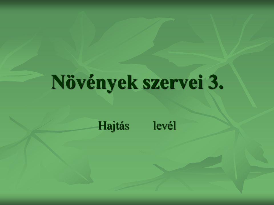 Növények szervei 3. Hajtás levél